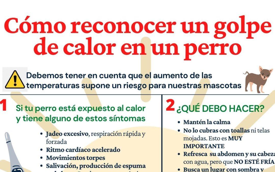 Puerto del Rosario lanza una campaña para recordar la importancia de proteger a las mascotas de los golpes de calor