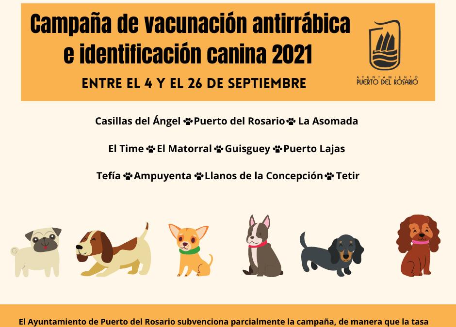 Puerto del Rosario pondrá en marcha en septiembre la Campaña de vacunación antirrábica e identificación canina 2021