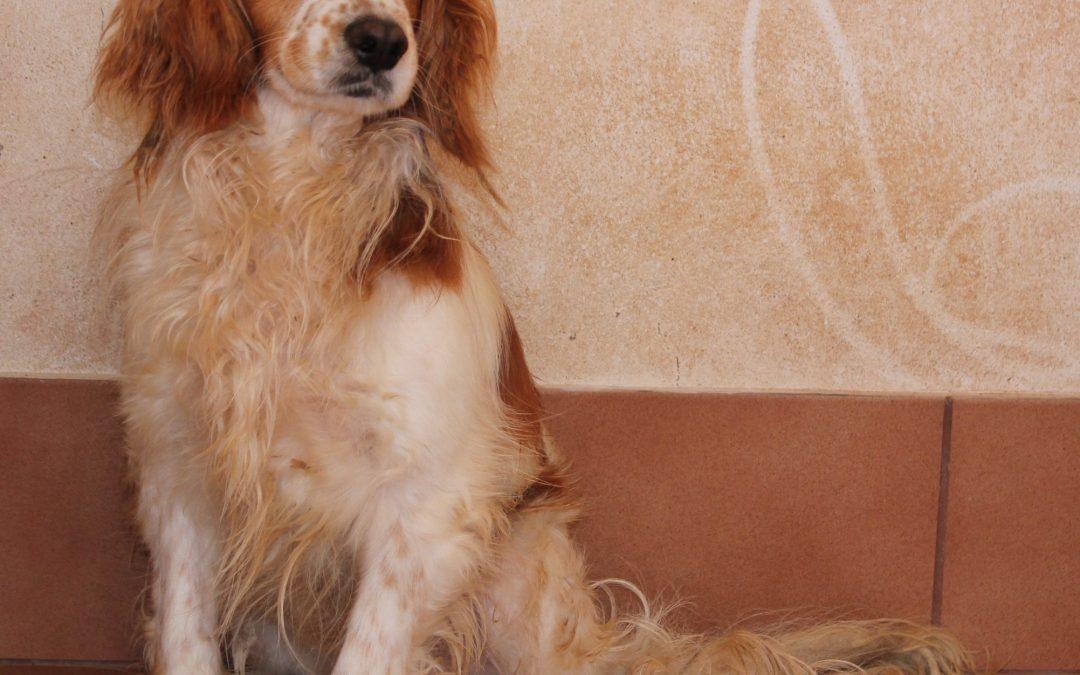 Más de 40 perros adoptados en dos meses