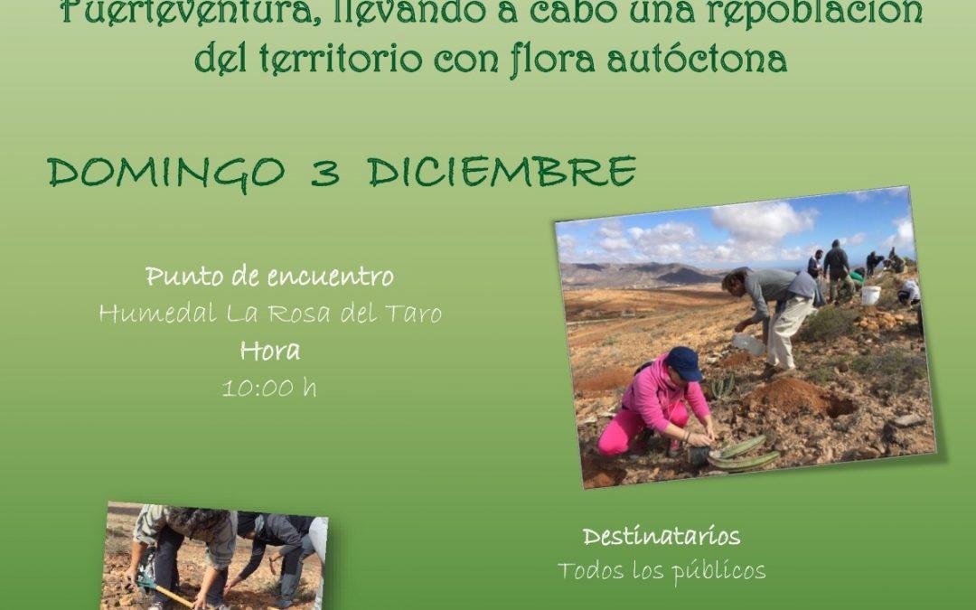 Celebra el Día del Árbol participando en  una plantación