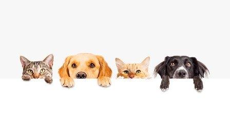 Aprobación definitiva de la modificación de la Ordenanza de Animales