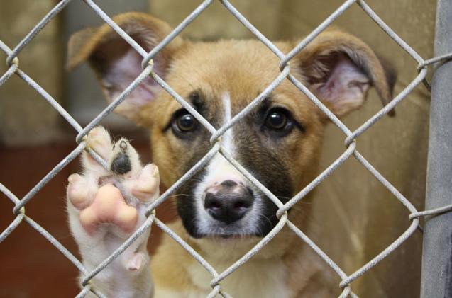 Nueva campaña de adopción de perros de manera gratuita