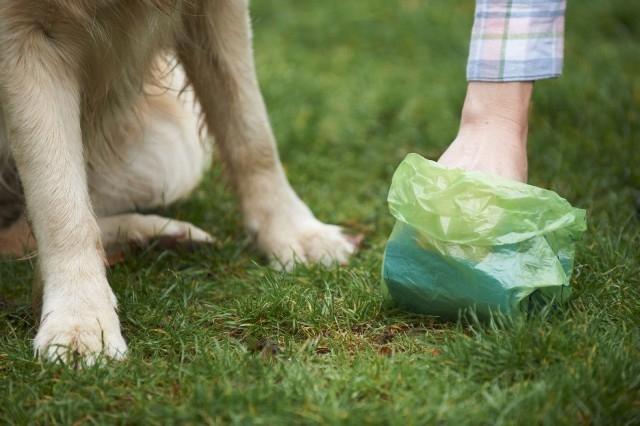 Puerto del Rosario emite la campaña 'Por una capital limpia, recoge los excrementos de tus mascotas'