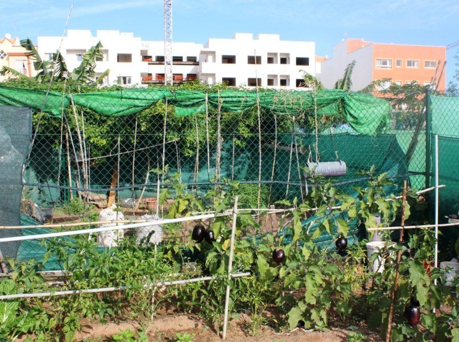 Alumnos del IES Gran Tarajal visitan los huertos urbanos capitalinos