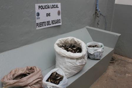 LA POLICIA LOCAL DE PUERTO DEL ROSARIO INTERVIENE 32 KILOS DE MEJILLONES QUE SE ESTABAN OFRECIENDO PARA SU VENTA