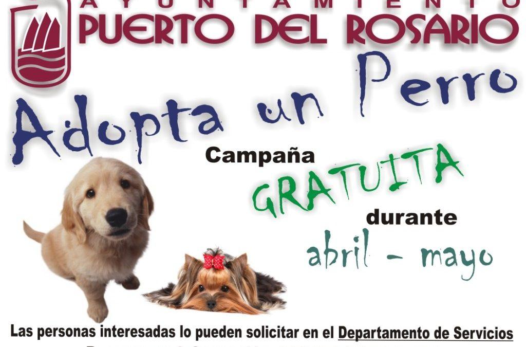 Nueva campaña de adopción de perros gratuita